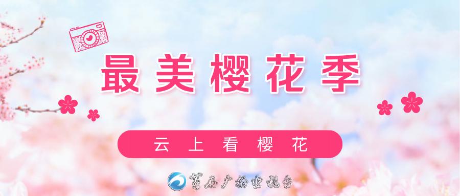 title='【直播】云上赏樱 美好如约而至'